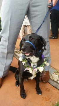 Pet at Sunshine Coast Wedding